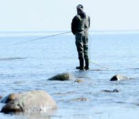 skal man have fisketegn i sverige